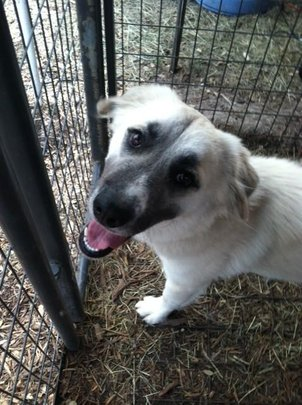 Charlotte is at Heart of Texas SPCA.