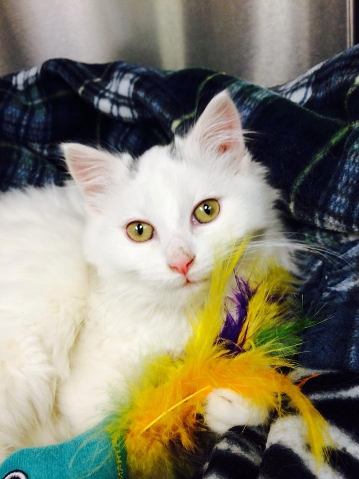 A scratcher helped Henrietta recover from surgery.