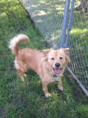 Idella is at Tejas Rescued Pet Adoptions in Texas.