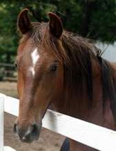 Lucky is with Horse Feathers Equine Center.