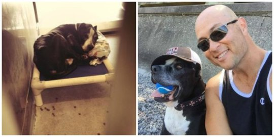 Otis at the shelter (left) and with his human dad