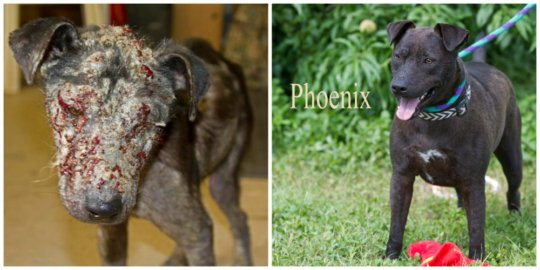 Phoenix before and after