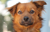 Save the Lives of Shelter Pets in North America