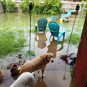 Rescutopia is distributing food for displaced pets