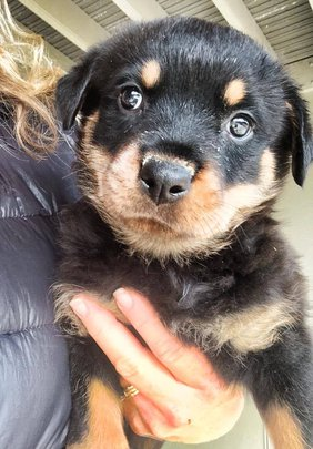 A pup of Stella, rescued from neglect in Spokane