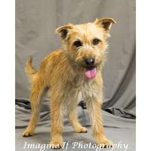 Scruffy was adopted from Misfits, Mutts and Meows