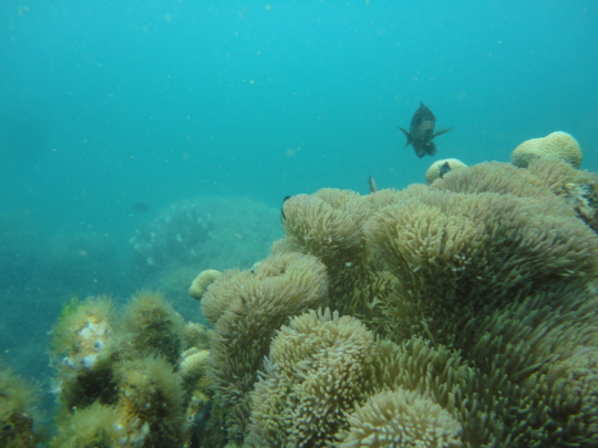 reef species