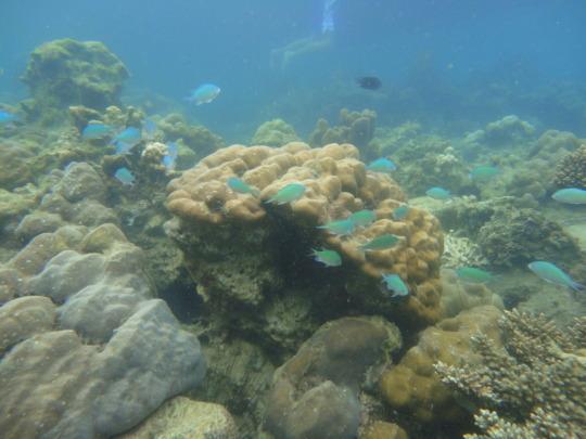 reef residents