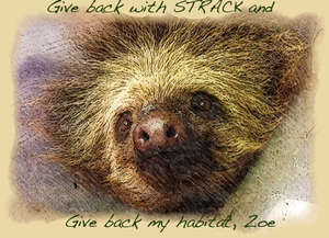 Give Back with Strack
