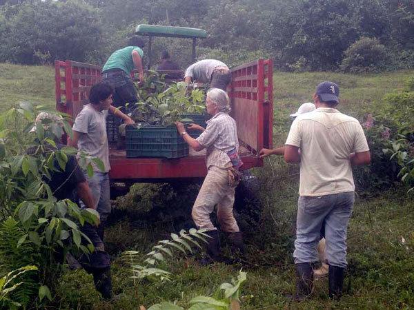 Loading trees on trailer, Rio Sol Bio Corridor