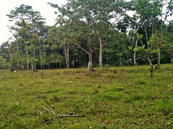 Rio Sol, Across the River, Maleku Reserve, Guatuso