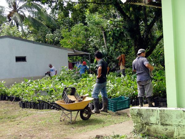 Nursery for Rio Sol Bio Corridor, 2011
