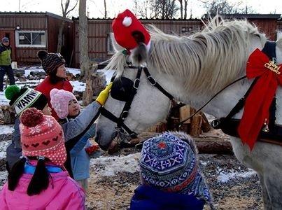 A reindeer is a horse