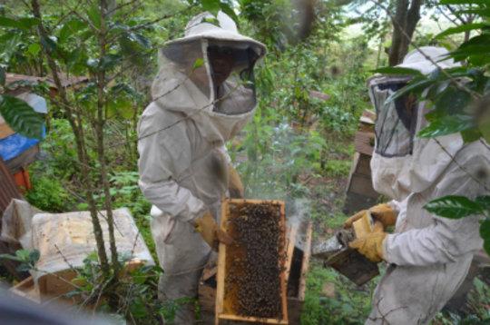 Bee Boys