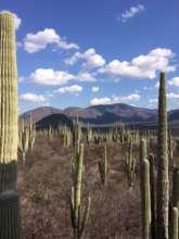 FMCN - Tehuacan Cuicatlan Biosphere Reserve