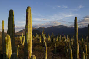 Biosphere Reserve Tehuacan-Cuicatlan (Conabio)