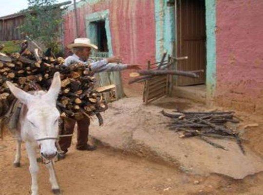Rural man collecting firewood