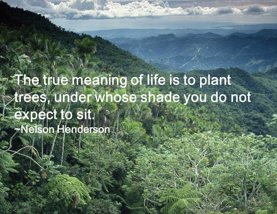 The meaning of planting trees