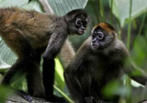 For the monkeys, Upala, Costa Rica