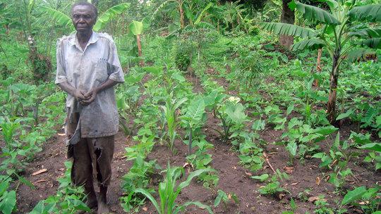 Small Holder Farmer in His Plot
