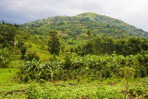 The Lush Hills of the Rwenzori Region