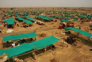 Mann Deshi Cattle Camp