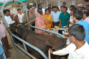 Health camp is organized at cattle camp for farmer