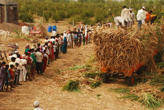 Distribution of fodders to farmers