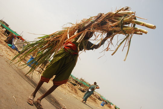 women carrying fodder