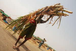 women carrying fodder