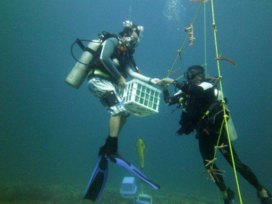 Volunteers instelling a coral nursery in galeras