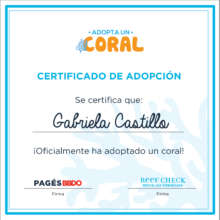 Adoption kit certificate