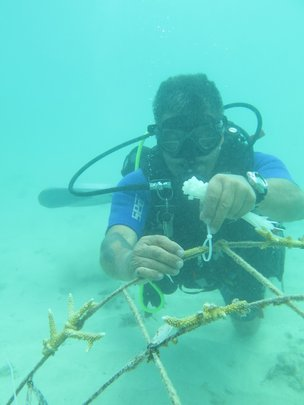 Galeras Diver Serge cleaning and measuring corals