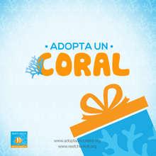 adopta un coral 2
