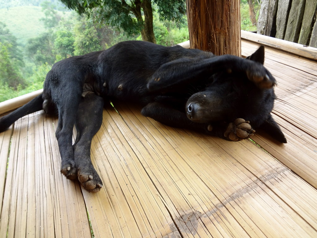 Vaccinate and Sterilise Stray Dogs in Thailand
