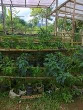 traditional farm 2