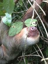 A happy sloth in Rancho Quemado