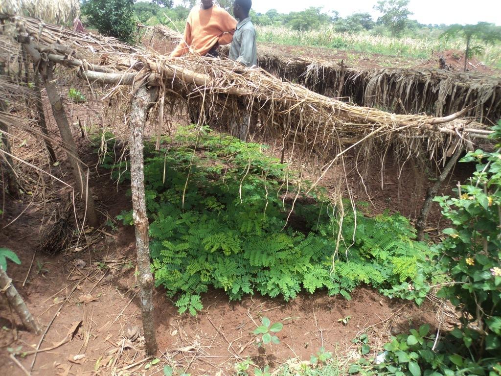 Kabugudo Community Nursery, Kidera (Buyende)
