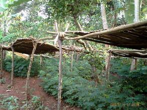 Namalemba Community Tree Nursery
