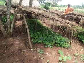 A Community Nursery in Kidera - Buyende