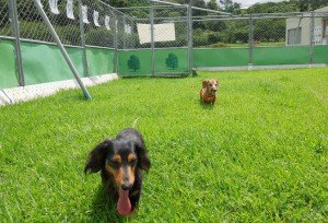 Two dogs enjoy the new expanded shelter