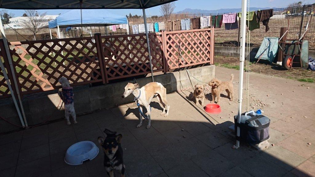 Pets sheltered in Dog Rescue Kumamoto.