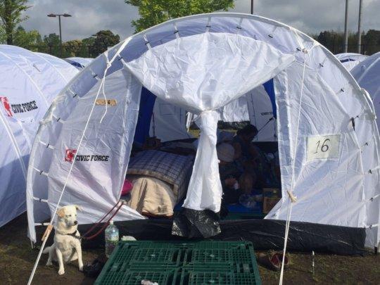 A pet-friendly Peace Winds shelter