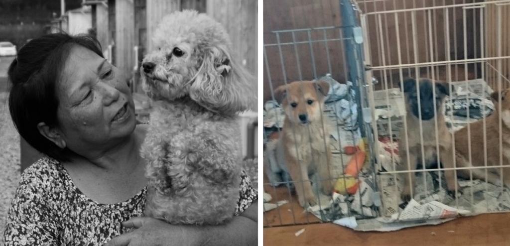 Rumiko and dog candy; Dog Rescue Kumamoto