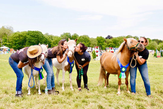 Adoptable Mini Horses Getting Kisses & Homes!