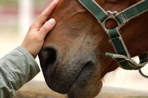 The bond with horses transcends time.