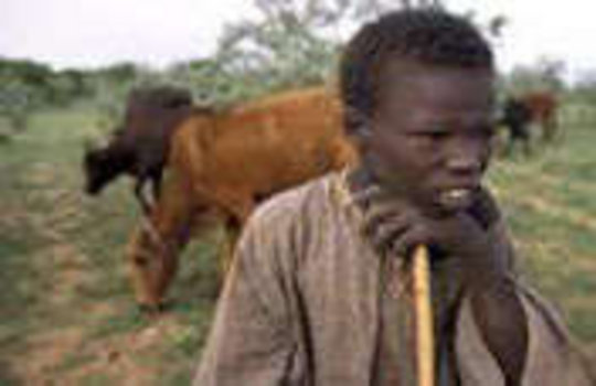 Prevent Further Food Crisis in Niger