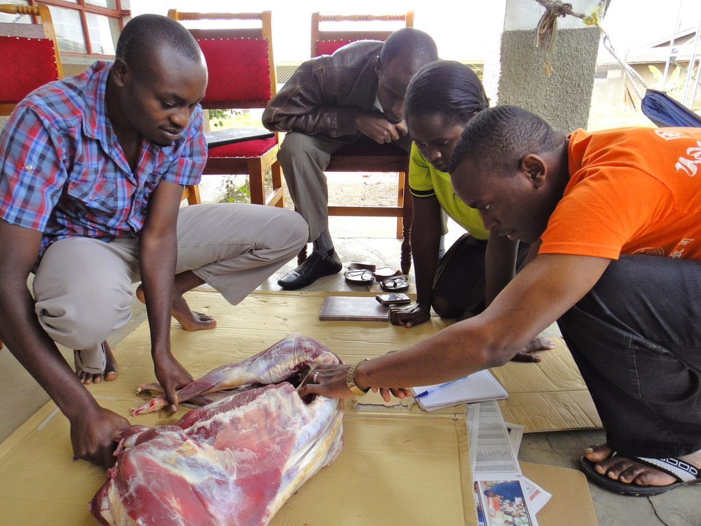 ECPs Learning Suturing Techniques on a Goat