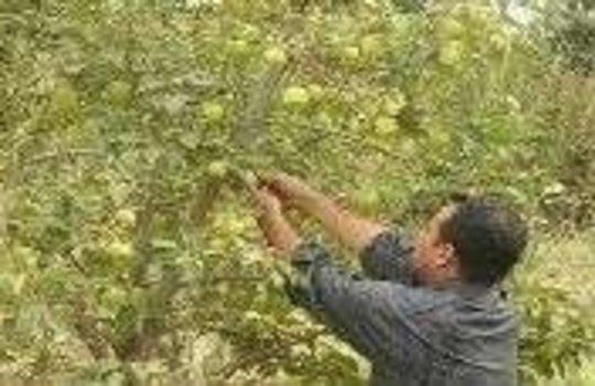 Provide Water Pumps to Iraqi Farmers