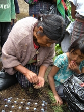 Candelaria Using Egg Cartons to Grow Seedlings